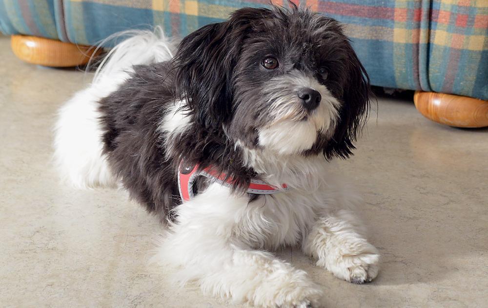 PWG Hoefli unser Hund